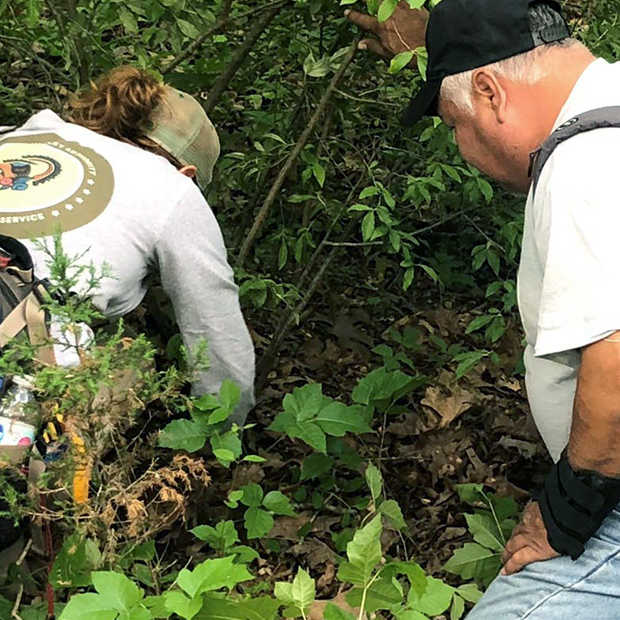 Two people examining plants in wild area